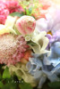 2016春の花2