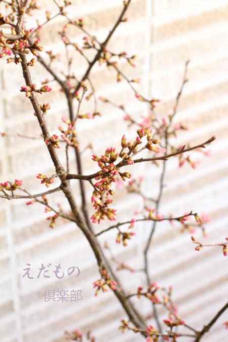 2月の枝もの倶楽部